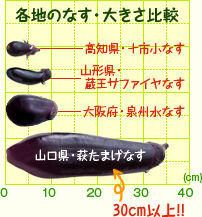 for Koch yamaguchi